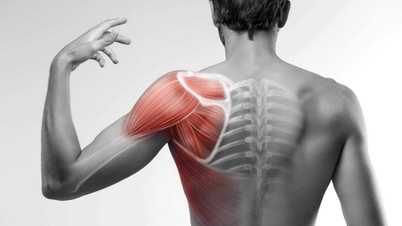muscolo infraspinato anatomia e funzioni