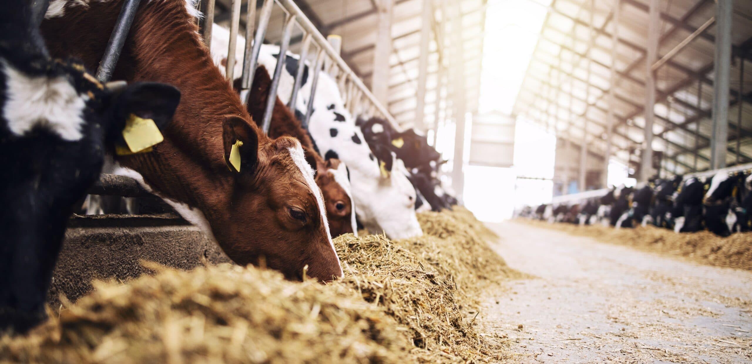 allevamento e dieta ecosostenibile