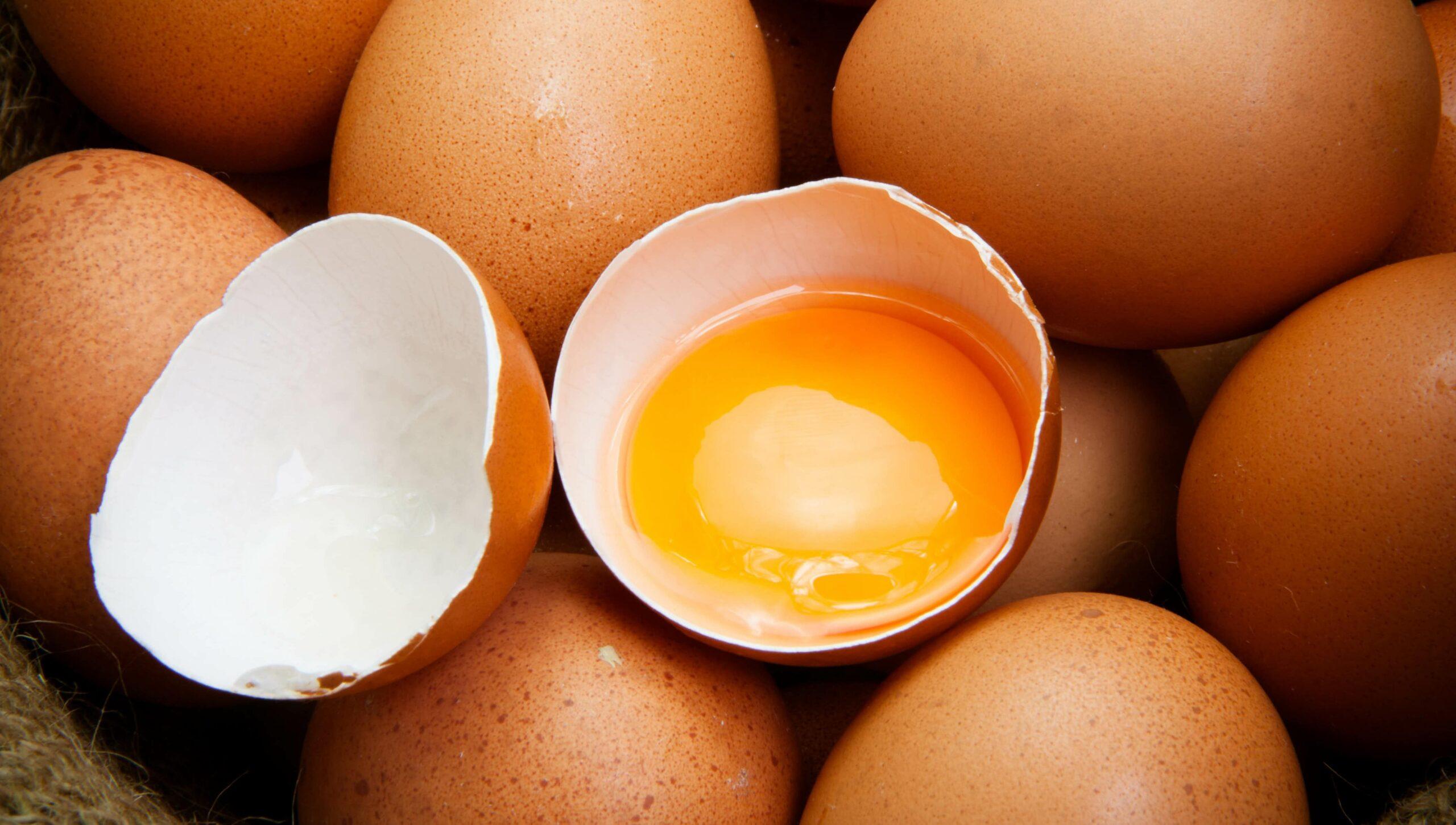 le uova fanno bene o fanno male nella dieta