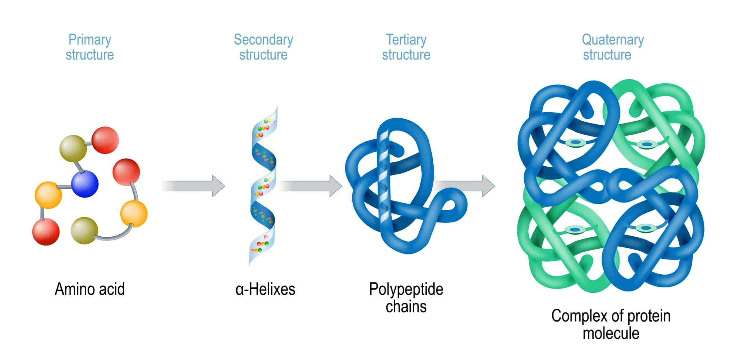 aminoacidi e proteine differenze