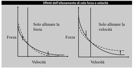 grafico forza velocità